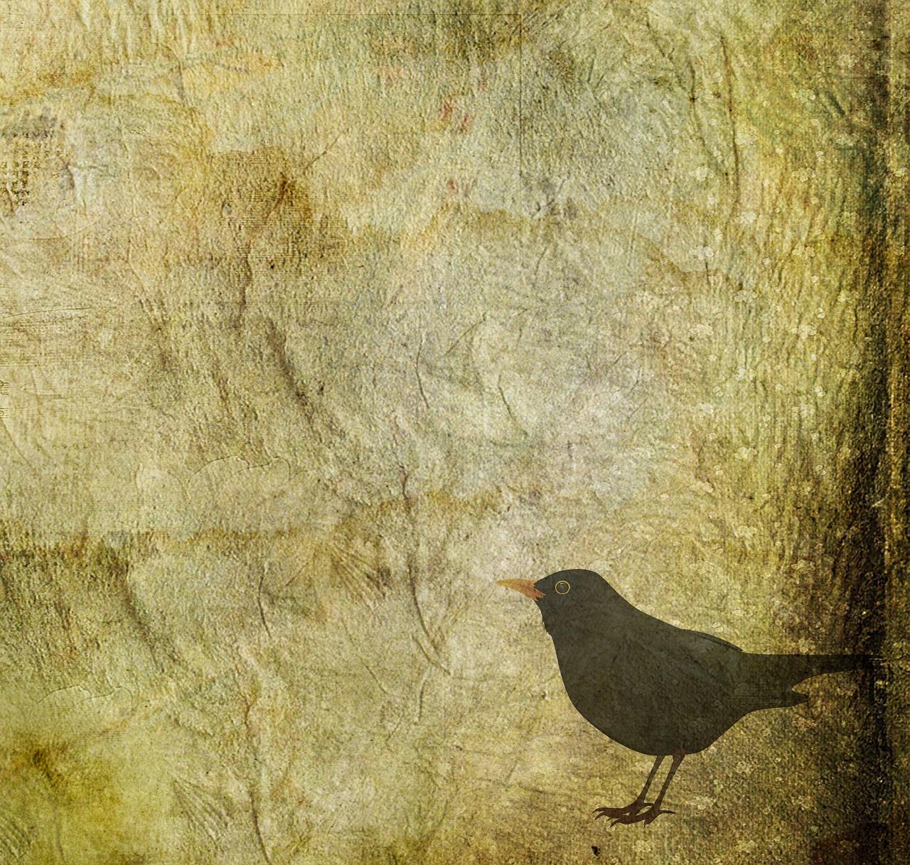 blackbird-1283862_1280
